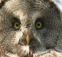 Great gray owl by CanDuCreations