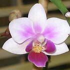 Orchid Explosion by Maria Bonnier-Perez
