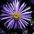 Lilac Splash by Susan E. King