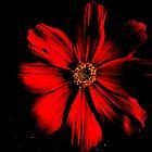 Dark Red Night by shelbu94