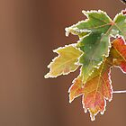 Frosted Leaves by ShutterbugCel