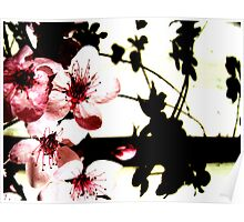 Blossoms and Shadows II Poster
