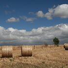 Rolled Hay in a Landscape by Jenny Brice