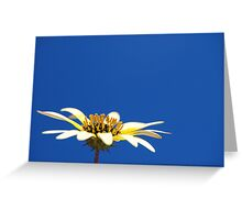 Sun Kissed Greeting Card