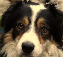 """""""Dogs do speak, but only to those who know how to listen.""""  by Michael Haslam"""