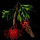 Grevillea Banksia by Kirsten Spry