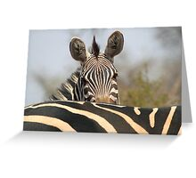 Plains Zebra Portrait, Akagera National Park, Rwanda, by Carole-Anne Fooks Greeting Card
