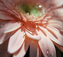 Pink Bubble II by Donna Adamski
