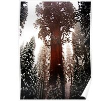 """General Sherman"" Sequoia National Park California Poster"