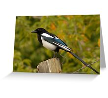 Blackbilled Magpie Greeting Card