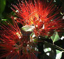 Pohutukawa flower by Jodi Fleming
