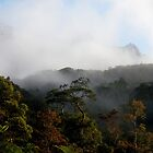 Rising above the Rainforest - Mount Kinabalu by Photography by Mathilde