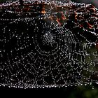 Spider's Jewels by Pamela Jayne Smith