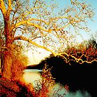 Fall at the River by Christine Till  @    CT-Graphics