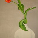 Red Tulip - Lâle by taiche