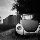 hidden in bushes by Victor Bezrukov