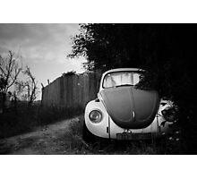 hidden in bushes Photographic Print