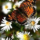Flutter by Veronica Maur'er