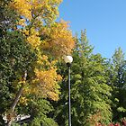 Fall in Reno by CassPics