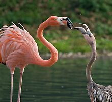 Flamingo and Chick by Krys Bailey