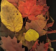 Autumn Leaf Collection 10 by Gene Cyr