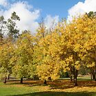 Golden Ash Trees in Autumn by Jenny Brice