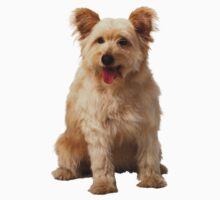 Cute dog by Vitalia