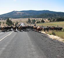 Typical cattle drive in Eastern Oregon by Dave Sandersfeld