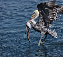 Catch of the Day by Jan  Wall