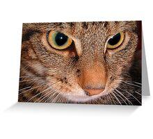 Eye Spy..... Greeting Card