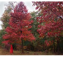 Rouge Autumn 1 Photographic Print
