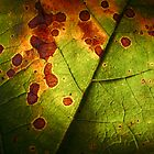 Leaf by DesignsByDeb