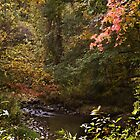 Autumn on the trail by cherylc1