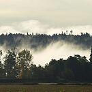 Fall Fog by Kat Miller