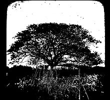 Another World TtV by Jules Campbell