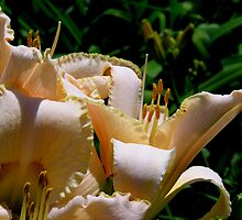 lilies in the sunlight by 1busymom