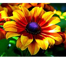 A Flower In Fall Coloring... Photographic Print
