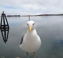 Hello Seagull by smilinginsonoma