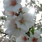 Blossom by Fay  Hughes