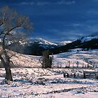 LAMAR VALLEY,WINTER by Chuck Wickham