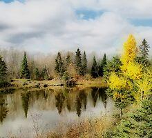 Autumn Colours VII by Teresa Zieba