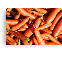 Carrots fresh from the garden. Canvas Print