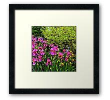 Border of Beauty Framed Print