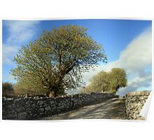 Scenic rural path Poster