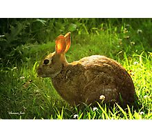 Wild Bunny ~ In a Patch of Clover Photographic Print