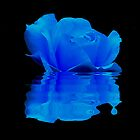 BLUE ROSE REFLECTION  by Johan  Nijenhuis