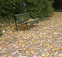 Bench in sea of leaves by Katherine Maguire