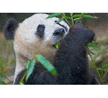 Stylized photo of Bai Yun, a giant panda. Hers was the first successful birth of a giant panda at the Wolong Giant Panda Research Center in China.  Photographic Print