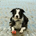 Border Collies by j Kirk Photography                      Kirk Friederich