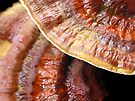 Reishi Up Close by Carla Wick/Jandelle Petters